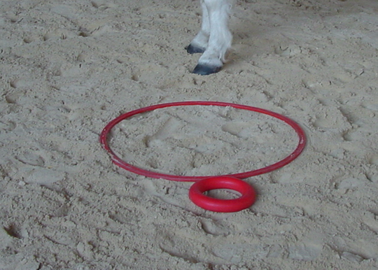 poney club de presinge - equine ethology