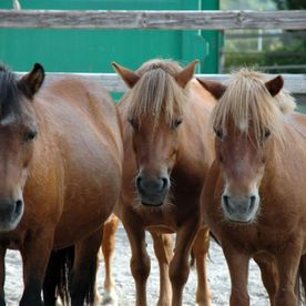 poney club de presinge - rides